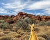 Kings Canyon - Uluru and Aussie outback in 5 days/Kings Canyon – Przygody na pustyni część druga