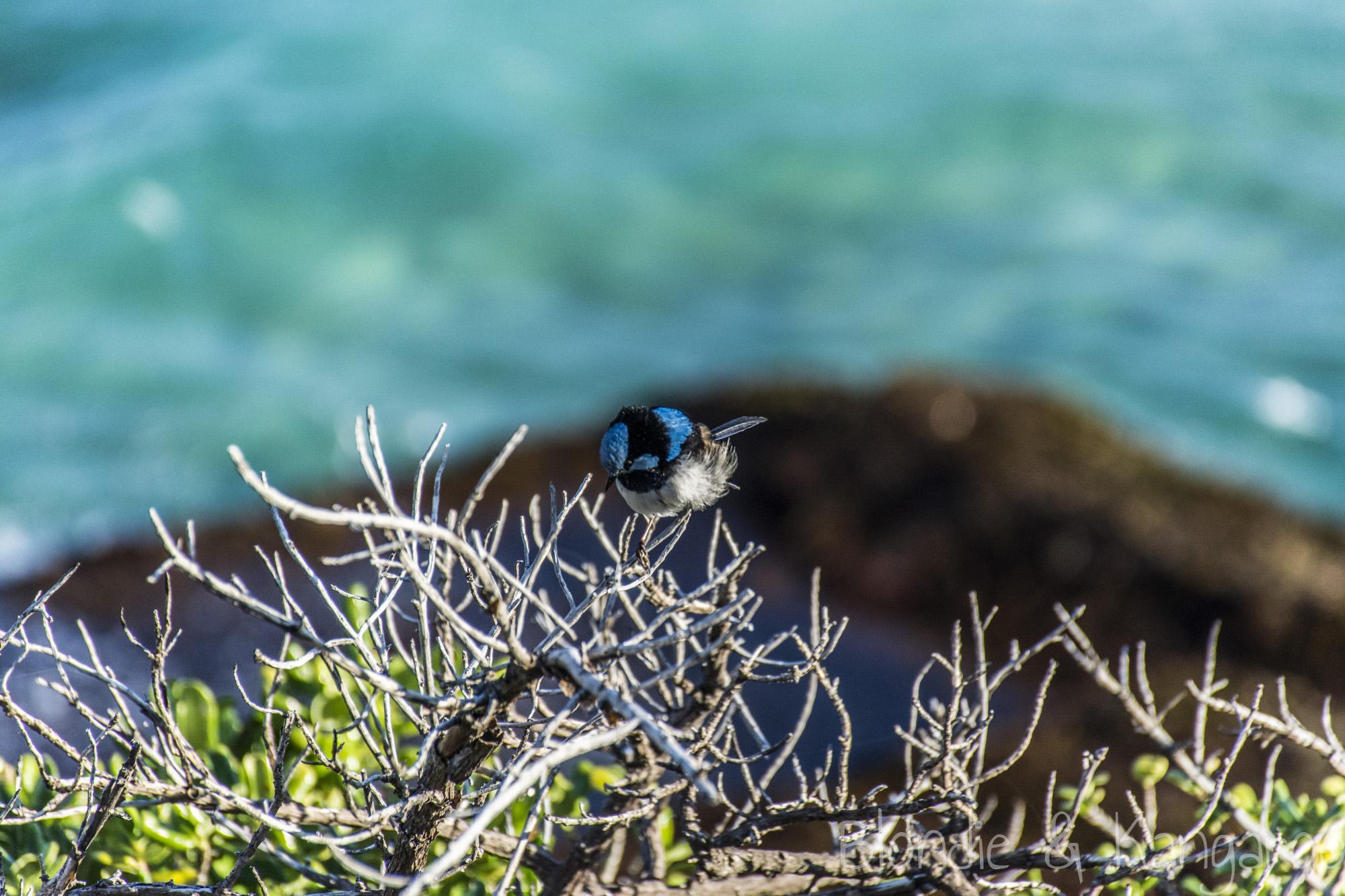 6 km spacer w raju, czyli trasa z Bondi do Coogee/6 km of paradise, Bondi – Coogee Coastal Walk