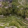 Tegalalang Rice Terraces